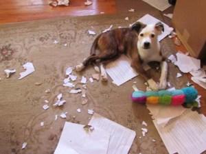 A Puppys Work IMG_2143 sml