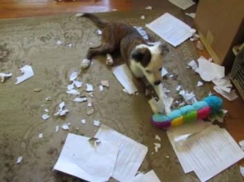 A Puppys Work IMG_2147 sml
