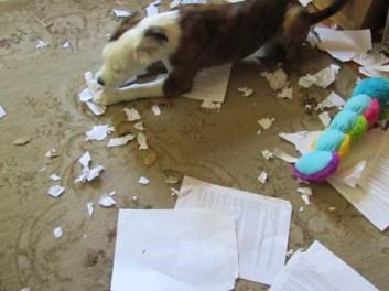 A Puppys Work IMG_2148 sml