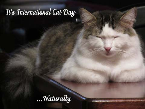 Intl Cat Day 2018 IMG_2462 poster JPEG sml
