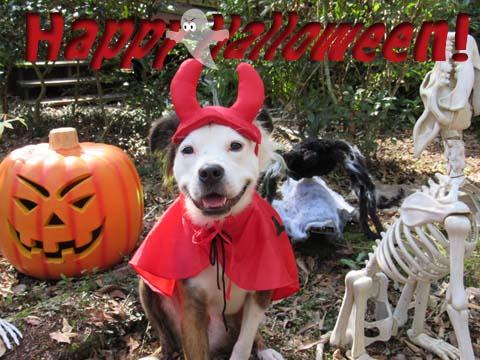IMG_0778 sml Halloween