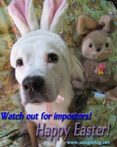 IMG_2712Easter dog poster 2019sml